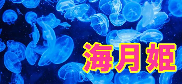 海月姫 ドラマ 見逃し配信